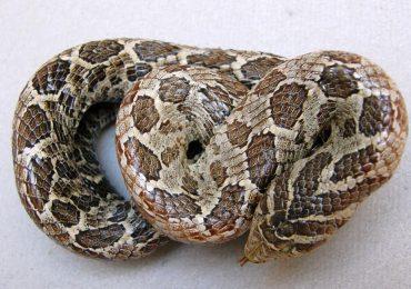 Se brindará un curso sobre identificación de serpientes venenosas de Uruguay